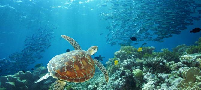 THE GREAT BARRIER REEF: WHERE AND HOW?