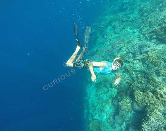 Snorkelling in Menjangan